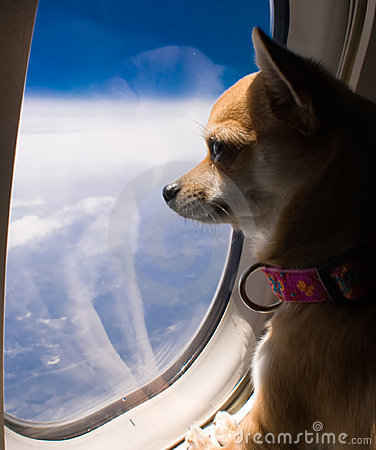 hey dog looking out of plane