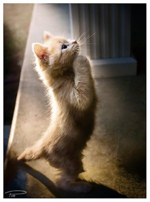 hey praying cat