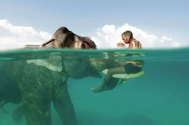 underwater elephant