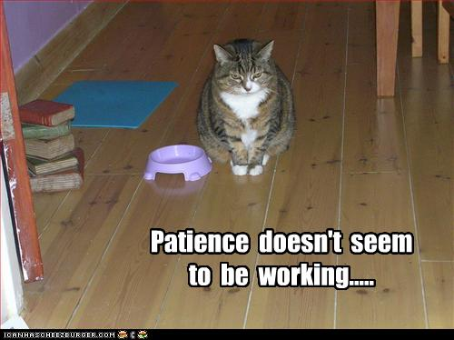 patience not working
