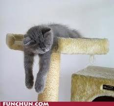 cat slouching