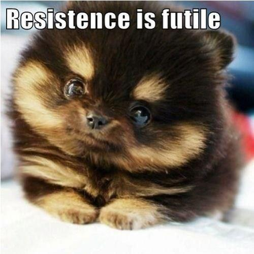 resistance is futile kitten